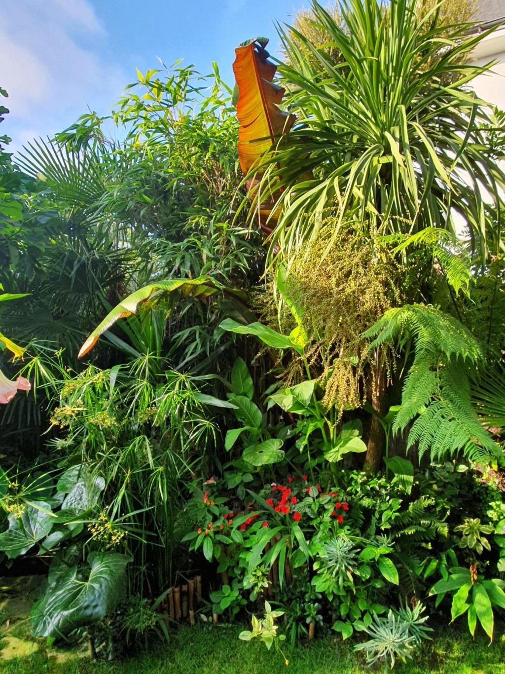 Rémi - Mon (tout) petit jardin en mode tropical - Page 14 20190845