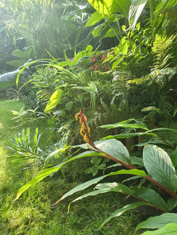 Rémi - Mon (tout) petit jardin en mode tropical - Page 14 20190846