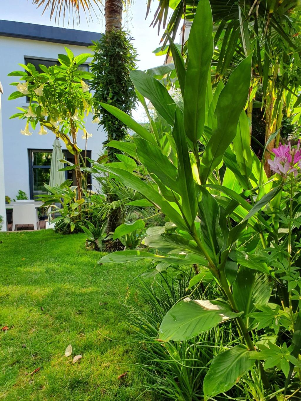 Rémi - Mon (tout) petit jardin en mode tropical - Page 14 20190848