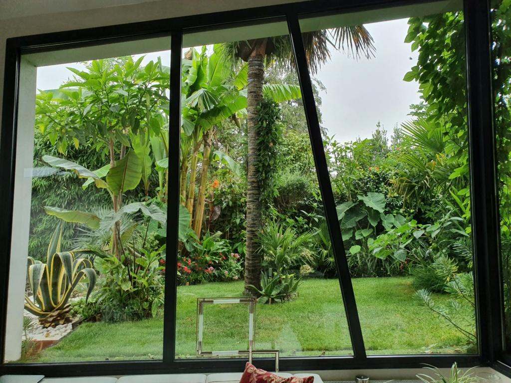 Rémi - Mon (tout) petit jardin en mode tropical - Page 14 20190876
