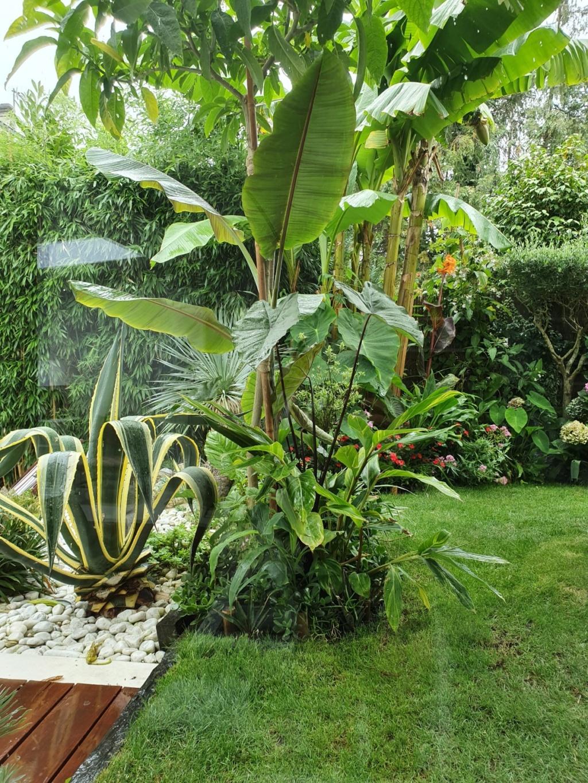 Rémi - Mon (tout) petit jardin en mode tropical - Page 14 20190878
