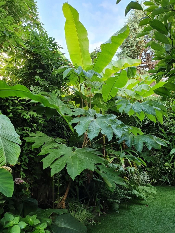 Rémi - Mon (tout) petit jardin en mode tropical - Page 14 20190879