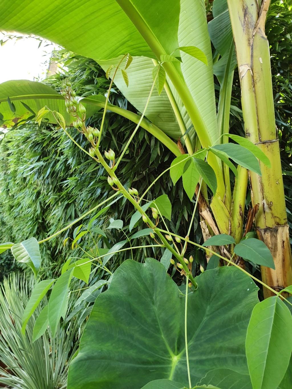 Rémi - Mon (tout) petit jardin en mode tropical - Page 14 20190882