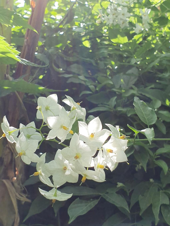 Rémi - Mon (tout) petit jardin en mode tropical - Page 14 20190888