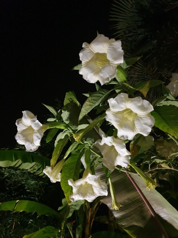 Rémi - Mon (tout) petit jardin en mode tropical - Page 14 20190894