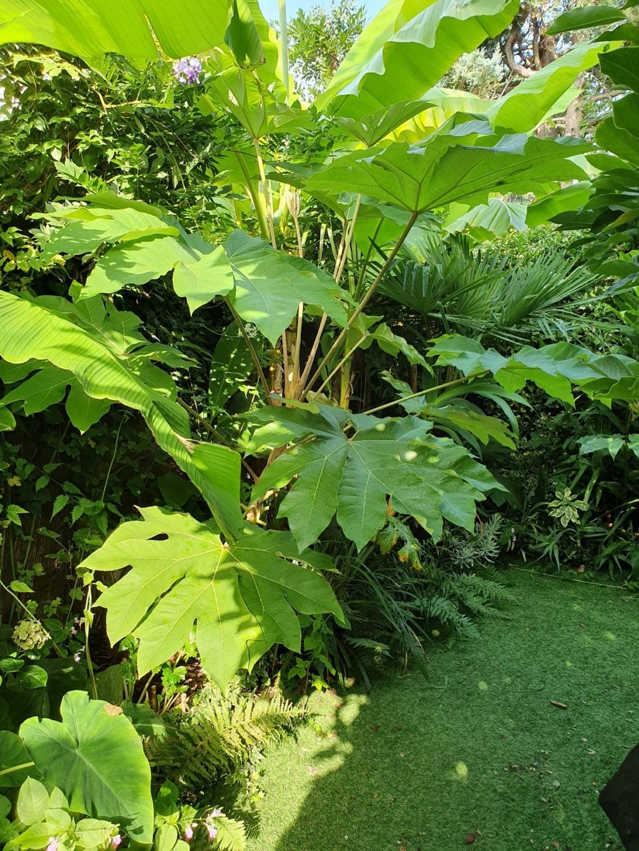 Rémi - Mon (tout) petit jardin en mode tropical - Page 14 20190900