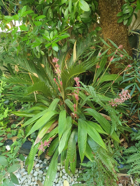Carex scaposa 20190973