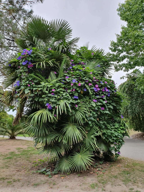(44) Parc du Grand Blottereau - Nantes - Page 3 20191024
