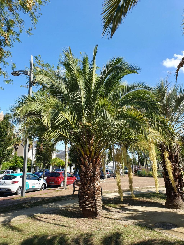 (44) La Palmeraie du port de Couëron  20191057