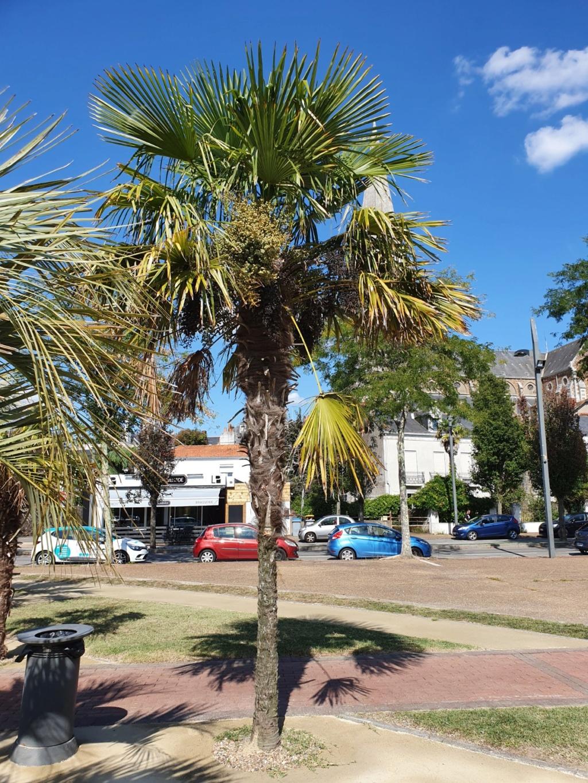 (44) La Palmeraie du port de Couëron  20191065