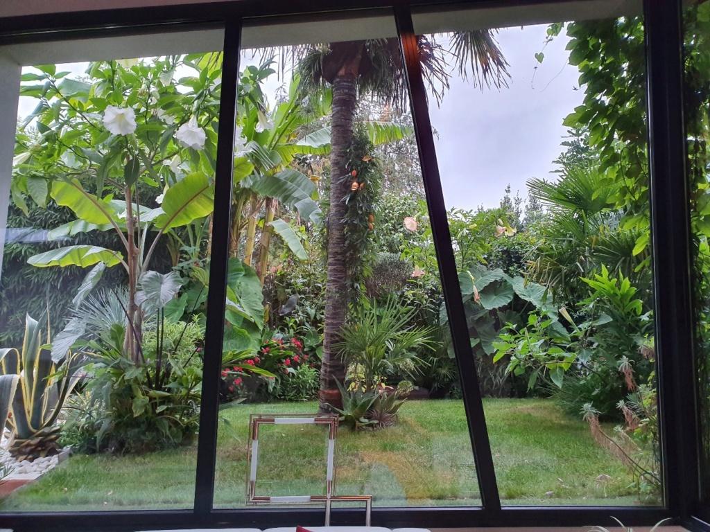 Rémi - Mon (tout) petit jardin en mode tropical - Page 15 20191067