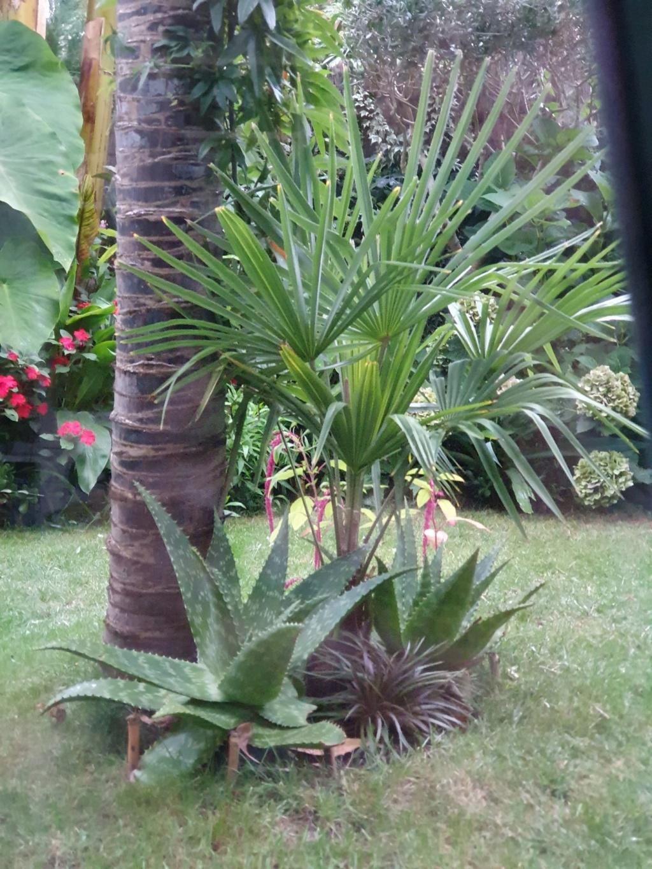 Rémi - Mon (tout) petit jardin en mode tropical - Page 15 20191069