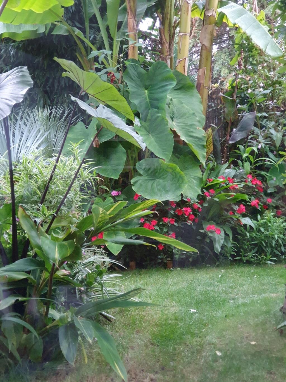 Rémi - Mon (tout) petit jardin en mode tropical - Page 15 20191070