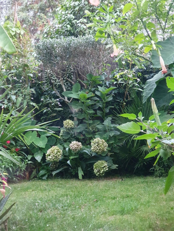 Rémi - Mon (tout) petit jardin en mode tropical - Page 15 20191071