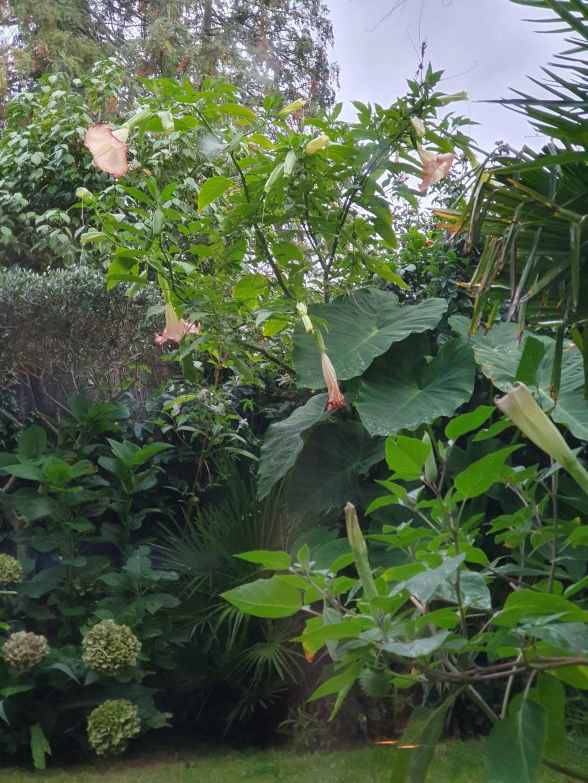Rémi - Mon (tout) petit jardin en mode tropical - Page 15 20191073