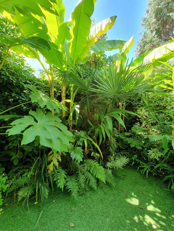 Rémi - Mon (tout) petit jardin en mode tropical - Page 15 20191105
