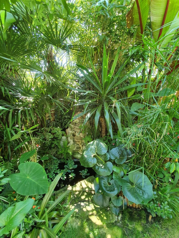 Rémi - Mon (tout) petit jardin en mode tropical - Page 15 20191108