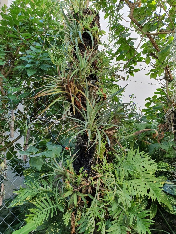 Rémi - Mon (tout) petit jardin en mode tropical - Page 15 20191109