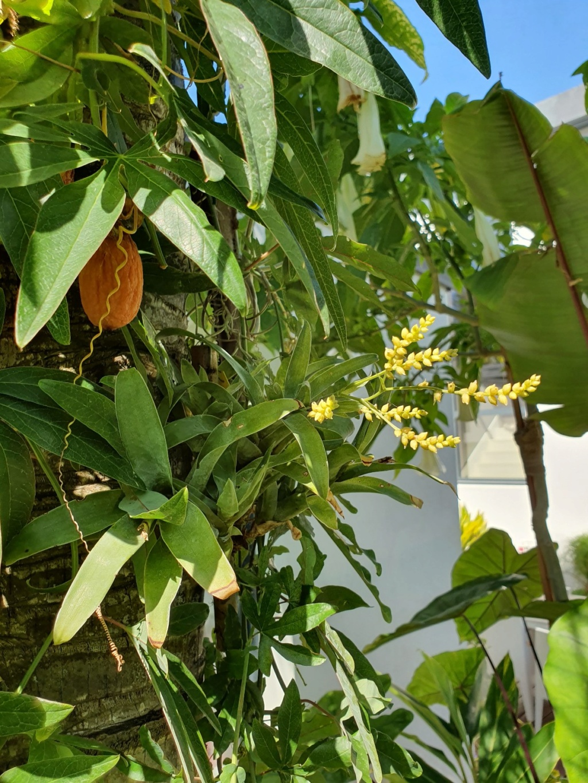 Rémi - Mon (tout) petit jardin en mode tropical - Page 15 20191111