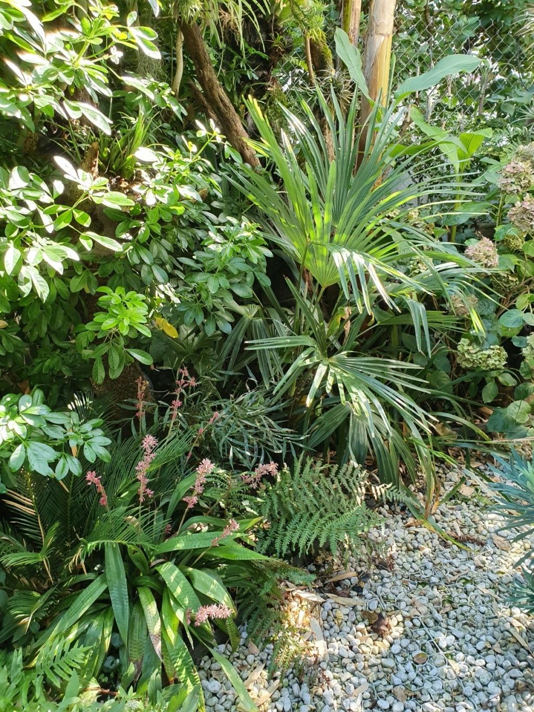 Rémi - Mon (tout) petit jardin en mode tropical - Page 15 20191113