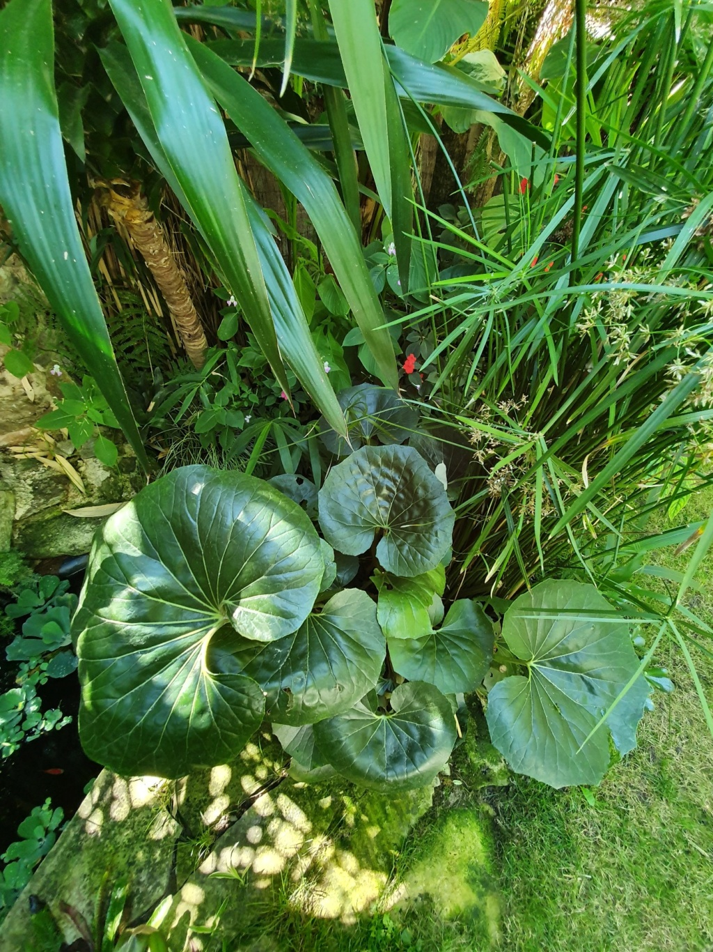 Rémi - Mon (tout) petit jardin en mode tropical - Page 15 20191114