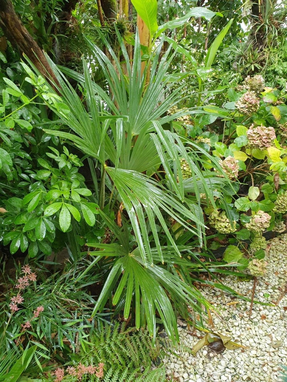 Rémi - Mon (tout) petit jardin en mode tropical - Page 15 20191146