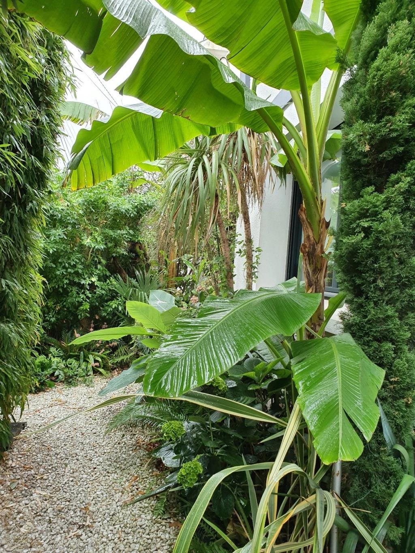 Rémi - Mon (tout) petit jardin en mode tropical - Page 15 20191147