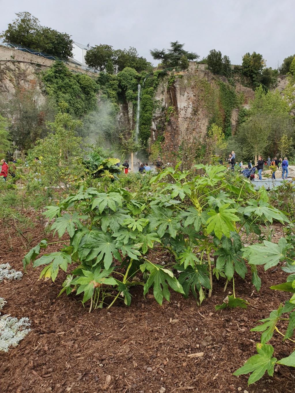 (44) Jardin Extraordinaire - Carrière Misery - Nantes 20191176