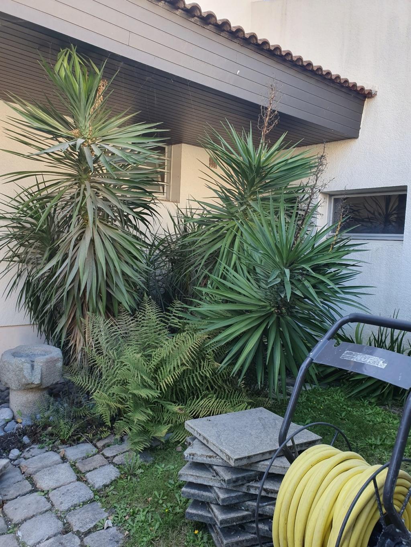 Yucca aloifolia - Page 3 20191229