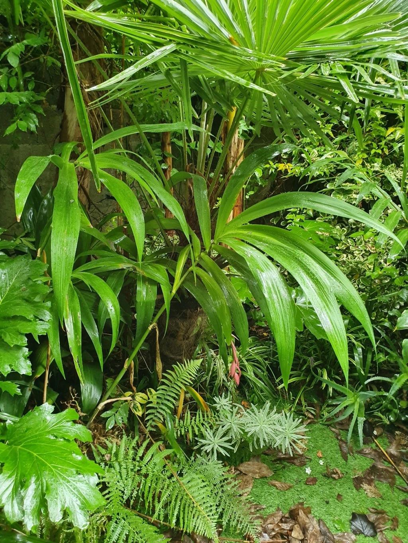 Rémi - Mon (tout) petit jardin en mode tropical - Page 15 20191250