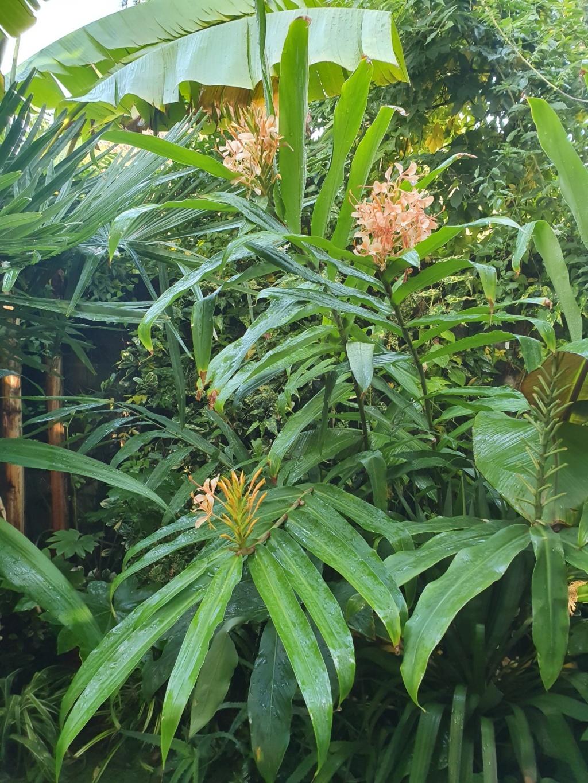 Rémi - Mon (tout) petit jardin en mode tropical - Page 16 20191290