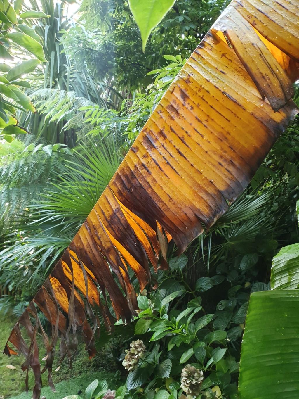 Rémi - Mon (tout) petit jardin en mode tropical - Page 16 20191294