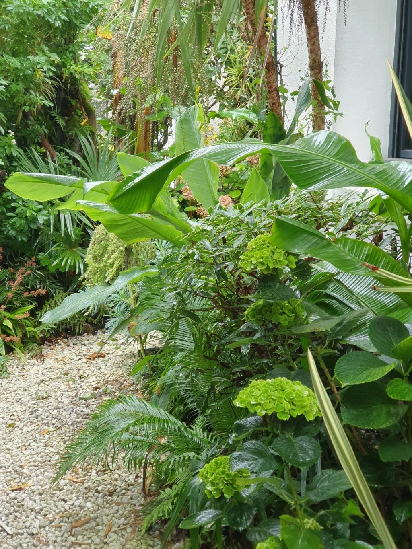 Rémi - Mon (tout) petit jardin en mode tropical - Page 16 20191377
