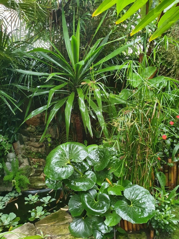 Rémi - Mon (tout) petit jardin en mode tropical - Page 16 20191379