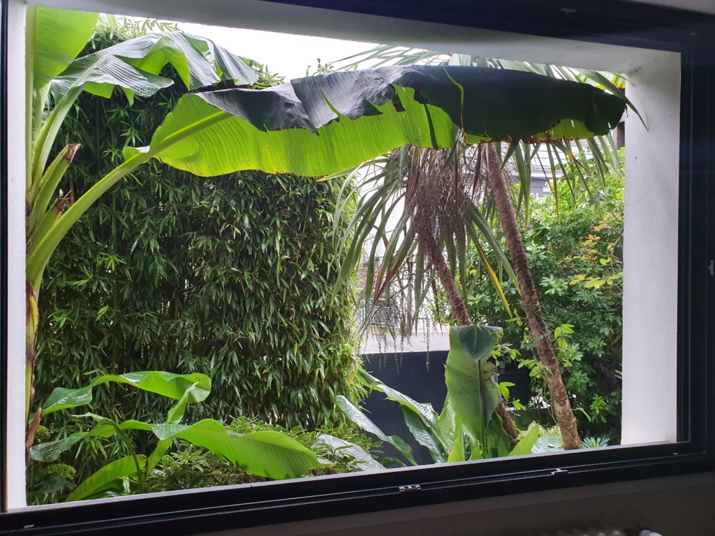 Rémi - Mon (tout) petit jardin en mode tropical - Page 16 20191380