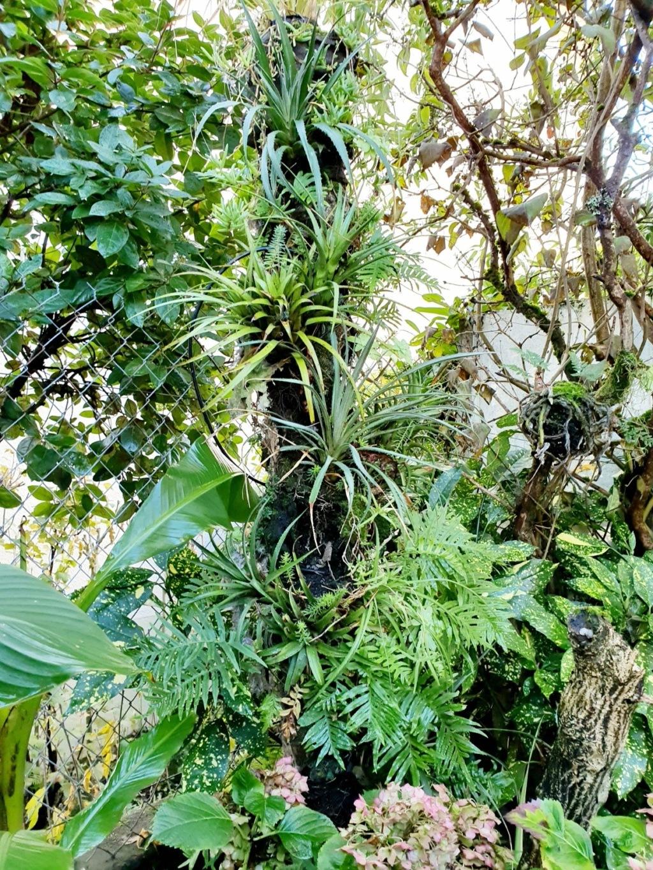 Support à épiphytes et broméliacées rustiques - Page 4 20191409