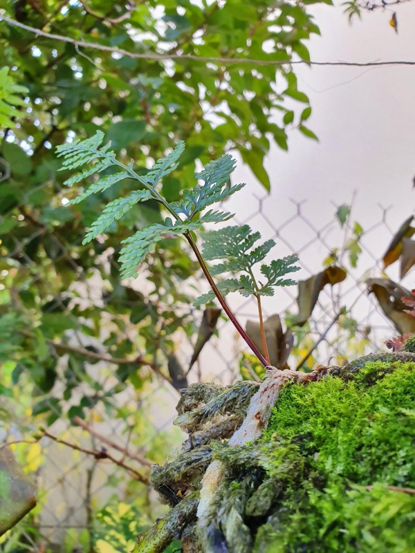 Support à épiphytes et broméliacées rustiques - Page 4 20191418