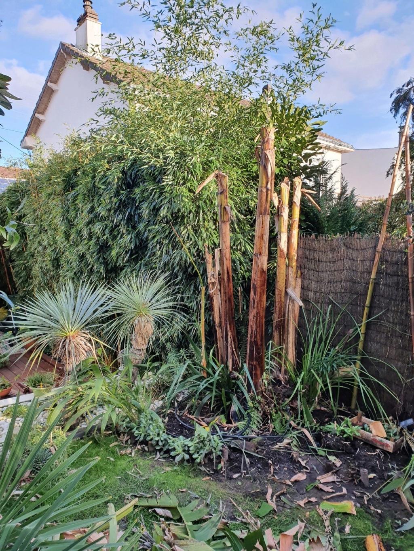 Rémi - Mon (tout) petit jardin en mode tropical - Page 16 20200116