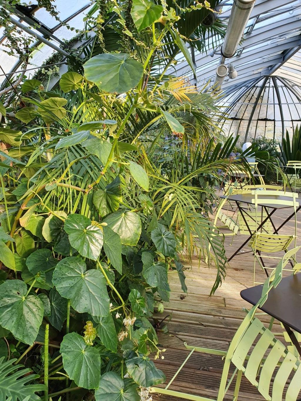(44) Jardin des plantes - Nantes - Page 4 20200150
