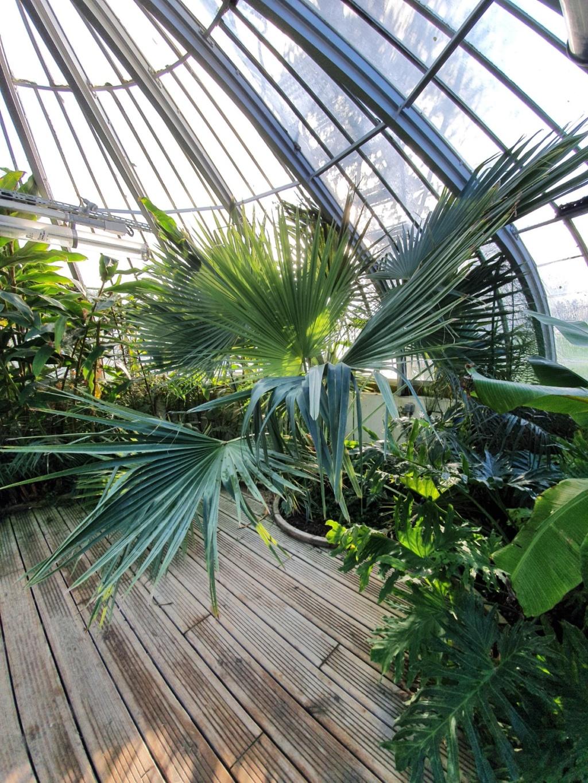(44) Jardin des plantes - Nantes - Page 4 20200151