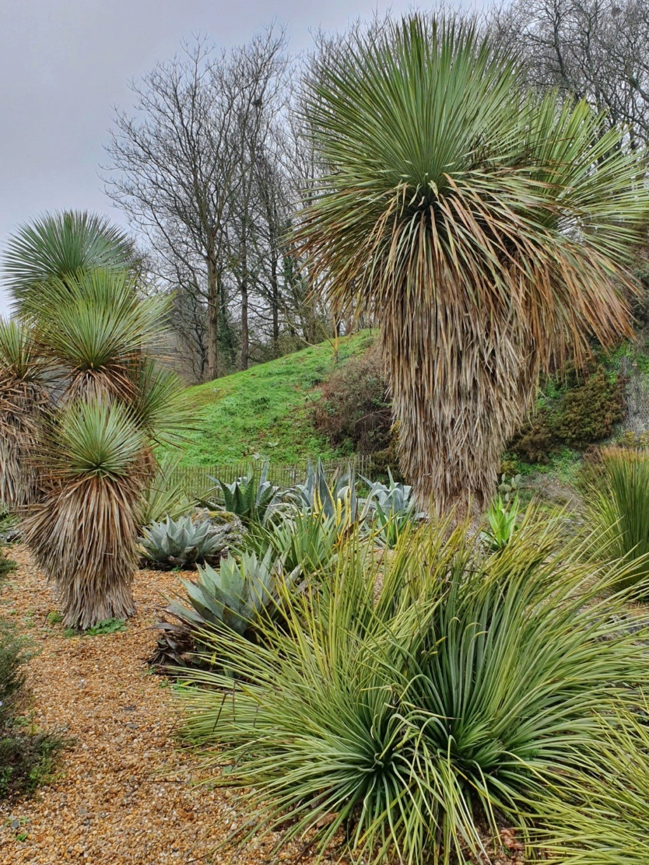 (44) Jardin Exotique de Pontpierre à Saint-Herblain 20200175