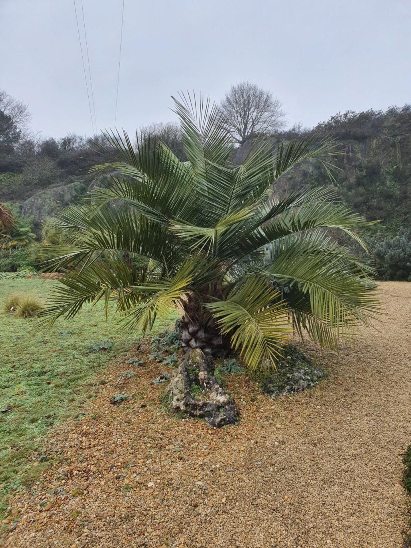 (44) Jardin Exotique de Pontpierre à Saint-Herblain 20200182
