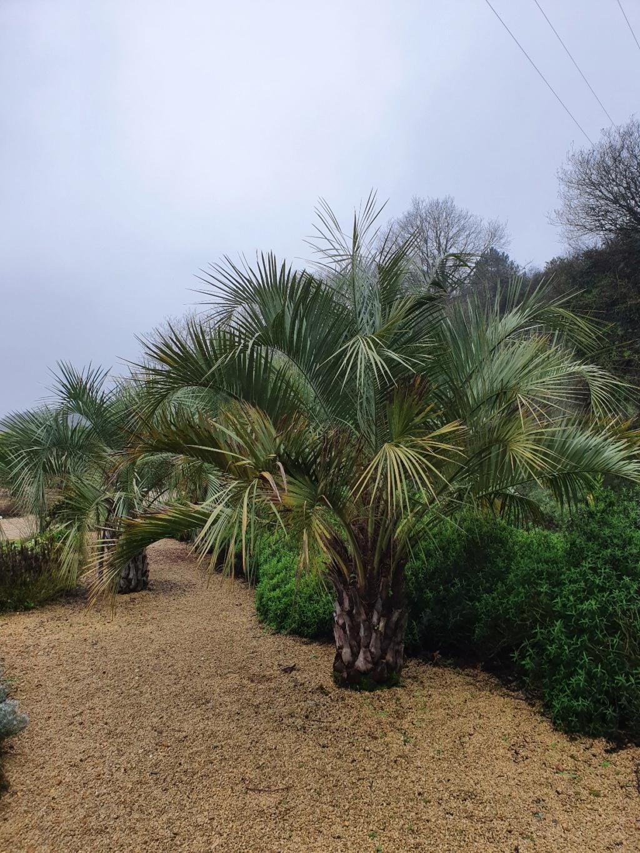 (44) Jardin Exotique de Pontpierre à Saint-Herblain 20200185