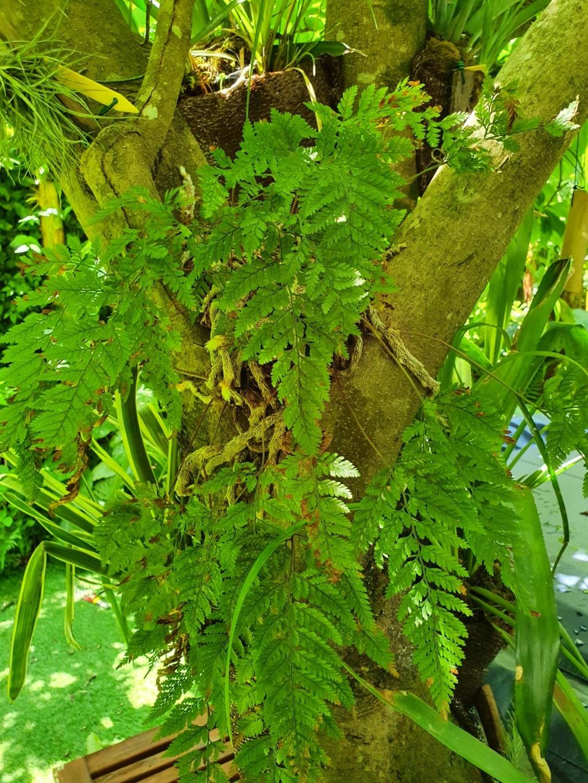 Support à épiphytes et broméliacées rustiques - Page 5 20200251