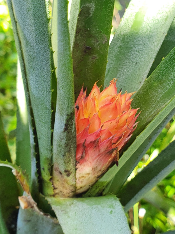 Support à épiphytes et broméliacées rustiques - Page 4 20200425