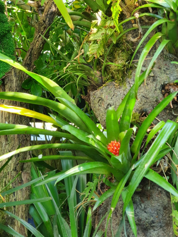 Support à épiphytes et broméliacées rustiques - Page 4 20200445