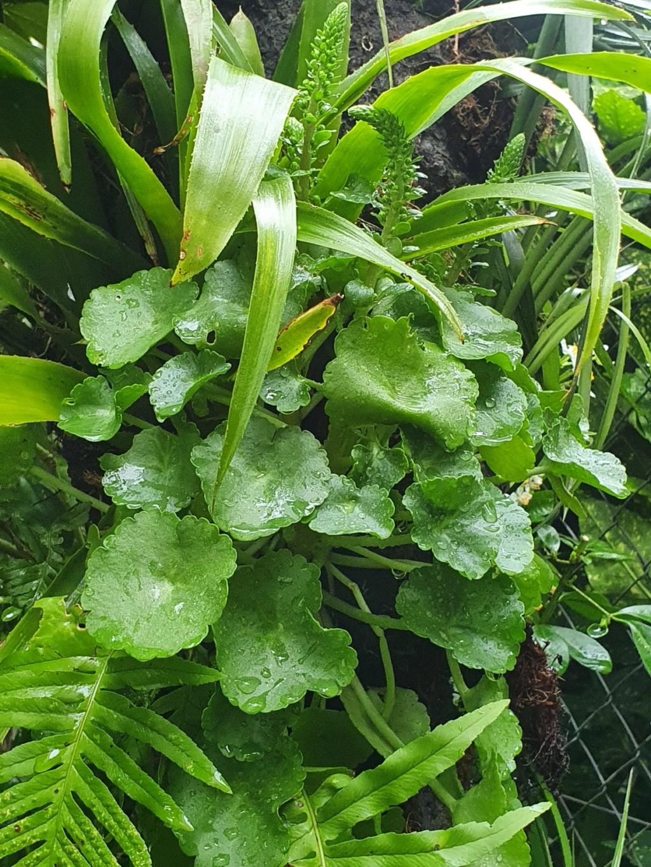 Support à épiphytes et broméliacées rustiques - Page 5 20200456
