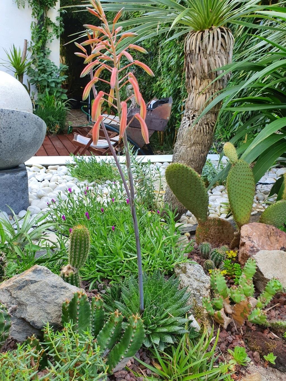 Aristaloe aristata  (= Aloe aristata) - Page 5 20200621
