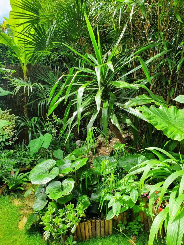 Rémi - Mon (tout) petit jardin en mode tropical - Page 18 20200638