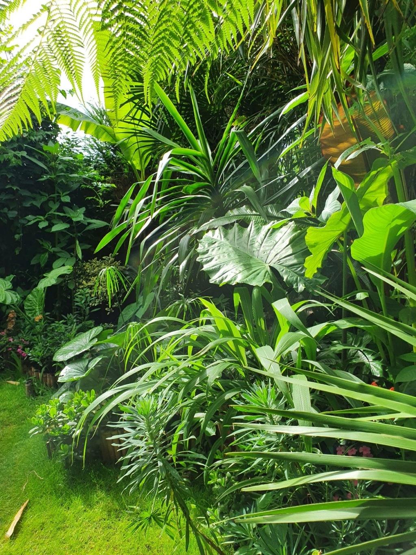 Rémi - Mon (tout) petit jardin en mode tropical - Page 18 20200639